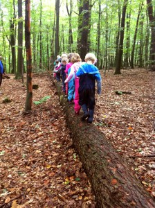 Kita_Wald